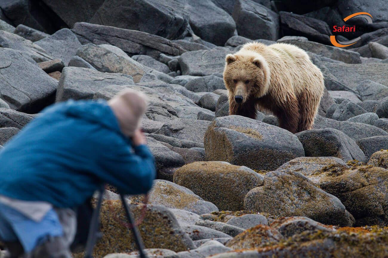 مقابله با خرس