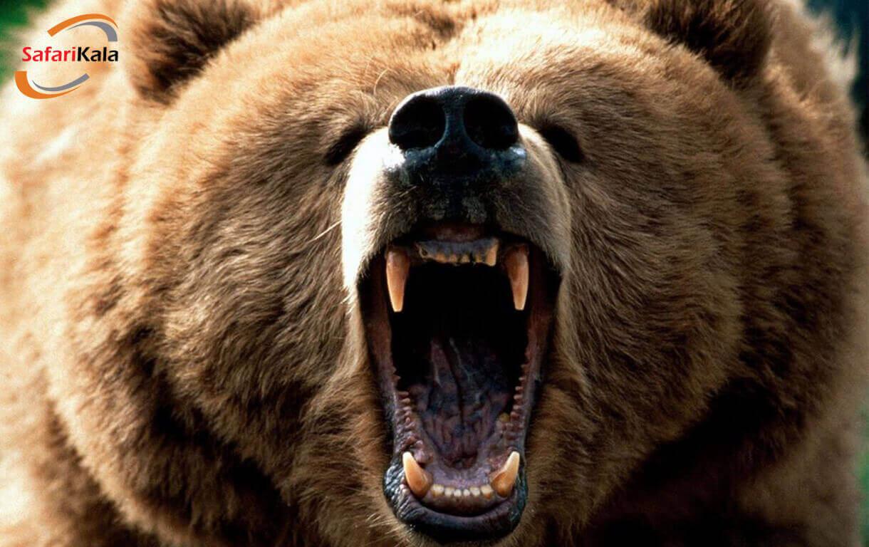 روشهای مقابله با خرس